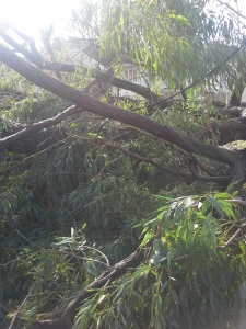 Jessica's house after storm (11)